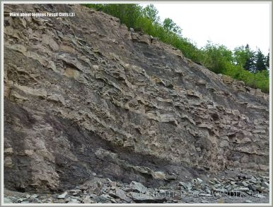 Upper Carboniferous, Pennsylvanian, Cumberland Group cliff strata in Nova Scotia