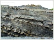 Rock strata at Joggins Fossil Cliffs
