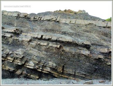 Rock strata at Joggins Fossil Cliffs
