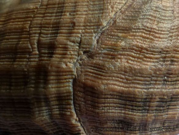 Close-up image of seashell texture