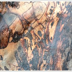 Natural pattern of fungal infection known as spalting in driftwood at Lyme Regis