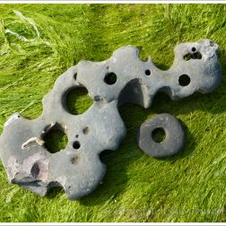 Fragments of shale with holes made by seashore creatures at Lyme Regis