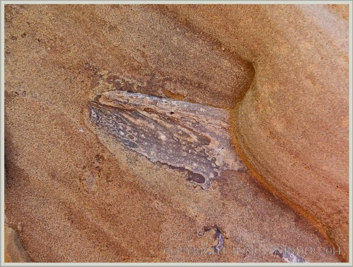 Ferruginous sandstone with fragment of bivalve fossil at Eype