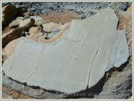 Boulder with preserved mud-crack drying pattern on the beach at Eype