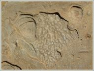 Weathering pattern in a beach boulder at the western end of Eype beach