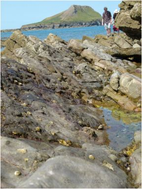 Seashore creatures like limpets cling to the sloping surfaces of jagged edge rock strata.