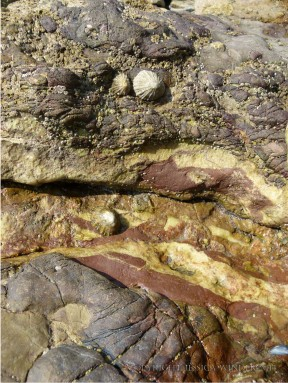 Fault lines across the Causeway rocks are filled with white calcite and red haematite.