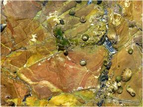 Shallow tidal pool of coloured rocks with grazing striped top shells
