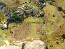 Shallow tide pool on the Worms Head Causeway in Gower, South Wales, with red stripe patterns in the Carboniferous Limestone