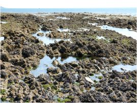 Extensive shallow rock pools interspersed among the jagged rocks on the far side of the Worms Head Causeway