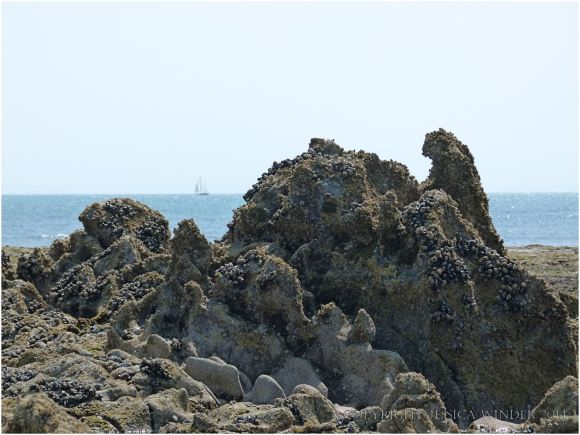 Strange eroded Carboniferous Limestone rocks on the Worms Head Causeway