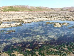 Extensive area of shallow rock pool on the Worms Head Causeway.