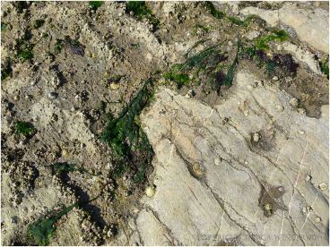 An obvious junction between bio-eroded and uneroded limestone on the Worms Head Causeway