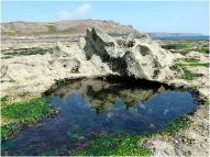 Unusual naturally-sculpted limestone reflected in a weed-filled tidal pool on the Worms Head Causeway