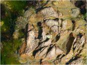 A matrix of shallow erosional depressions in seashore limestone