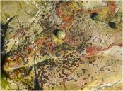 A shallow rock pool with red haematite vein and small spots of red encrusting algae