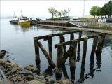 Derelict wooden pier structure with encrusting marine organisms