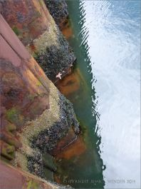 Parallel bands of barnacles and mussels on a rusty metal wharf revetment