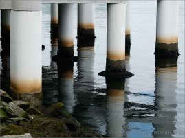 Bands of barnacles and mussels on the waterline of metal support piles beneath a harbourside building