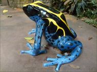 Giant model of a frog in the Biodome