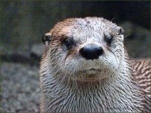 Otter in the Biodome