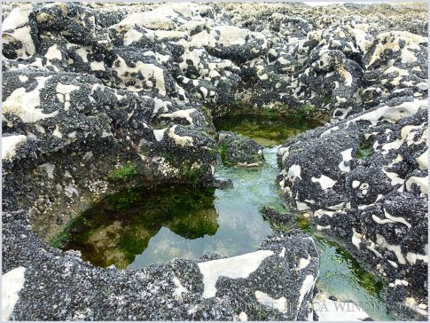 Small seaweed-filled rock pool at Burry Holms