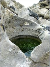 Near perfectly circular rock pool eroded into the limestone at Burry Holms.