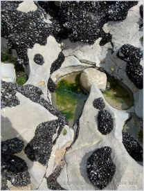 Small rock pool in eroded limestone surface at Burry Holms