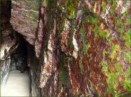 Green and red biofilm encrusting cave walls at Tenby