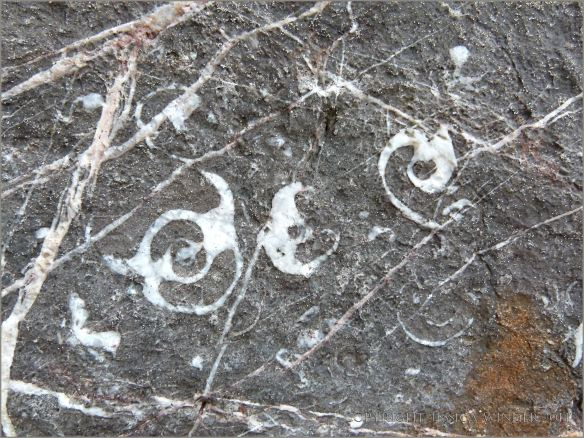 Gastropod fossils embedded in limestone cliffs at Tenby