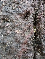 Reddened Carboniferous Limestone with numerous fine cracks and small-scale erosional damage