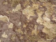Rock pattern and texture in a beach boulder