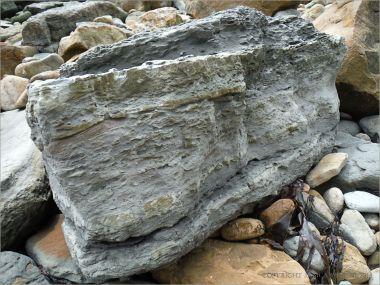 Bioturbated rock with ichnofossils of crustacean burrows