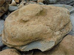 Odd shaped beach boulder