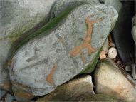 Detail of orange sediment fill in trace fossil burrows
