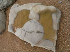 Sedimentary rock boulder on the seashore with pattern of two types of rock