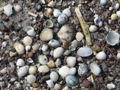 Selection of seashells on the seashore