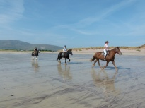Horse riders on a sandy beach