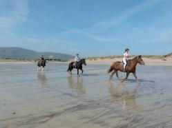 Horse riders on a sandy beach