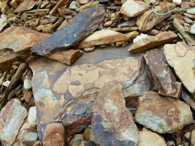 Colourful slabs of Silurian rock on the beach