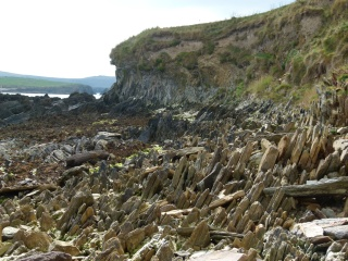 Cliff strata and beach outcrops of Silurian age on the north shore of Ferriters Cove