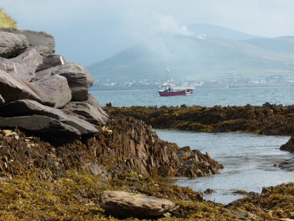 View looking due east across Smerwick Harbour showing outcrop of Silurian rock topped by rip-rap boulders