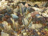 Silurian rocks on the beach at Smerwick Harbour