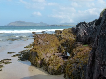 Devonian rocks with black lichen and golden seaweeds on the beach at Smerwick Harbour