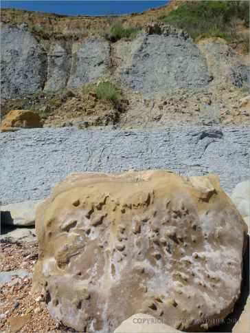 Sedimentary rock boulder on the seashore showing nodules