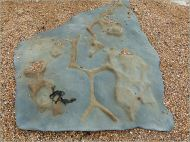 Rocks on the beach with fossil burrows at Eype in Dorset, England