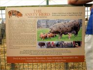 Poster about Oxford Sandy & Black Pigs in the Ansty Herd