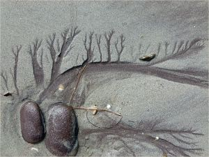 Dendritic drainage patterns in the sand with red pebbles