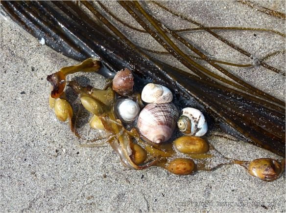 Seaweed and seashells on a sandy beach