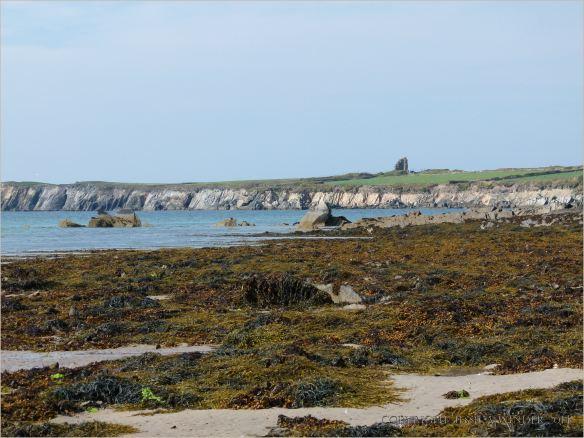 Seaweed covered rocks on the sandy beach at Ferriters Cove